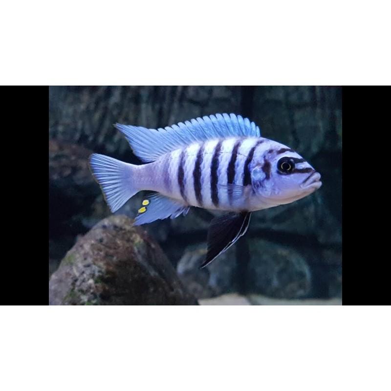 Maison Reef